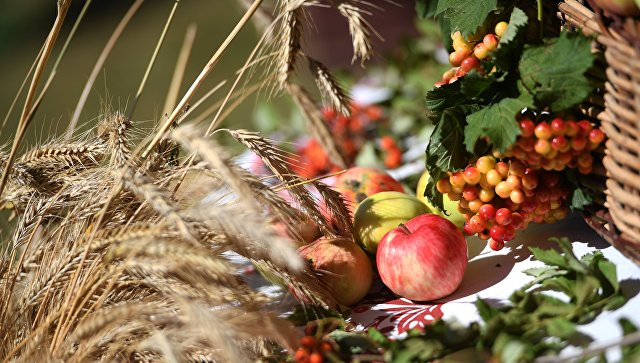 Колосья пшеницы и яблоки на столе