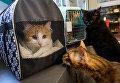 Коты, живущие в котокафе Республика кошек, знакомятся с эрмитажными котами