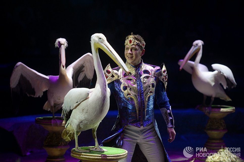 Исполнение номера Дрессированные пеликаны Райский сад на гала-шоу всемирного фестиваля циркового искусства Идол