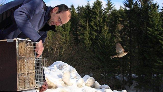Биологи вконце концов пояснили, почему воробьи невырастают доразмера голубей