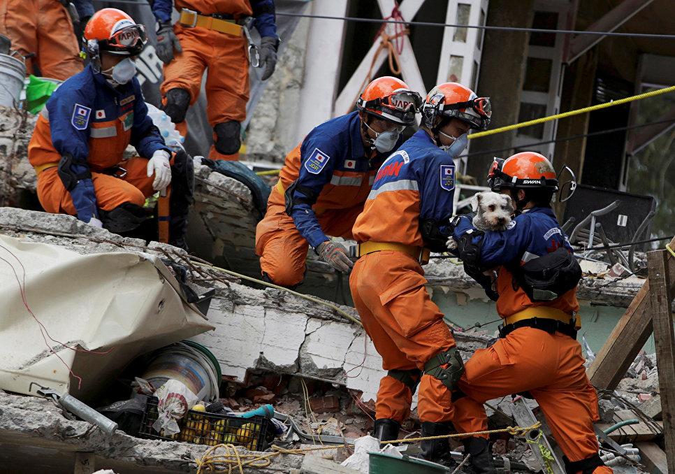 Японские спасатели достают собаку из-под завалов после землетрясения в Мехико.