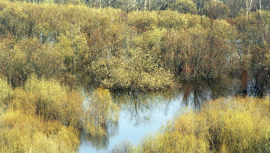 ВВолгоградской области начали расчищать ерик Чайка