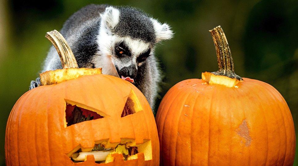 Аксенов попросил школы и университеты Крыма непраздновать Хеллоуин