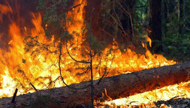 ВПриамурье потушили пожар вХинганском заповеднике