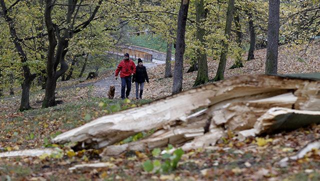 Жители проходят мимо упавшего дерева. Архивное фото
