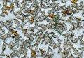Jaime Rojo. Monarchs in the Snow