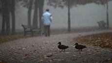 Мужчина гуляет в парке в Киеве, Украина