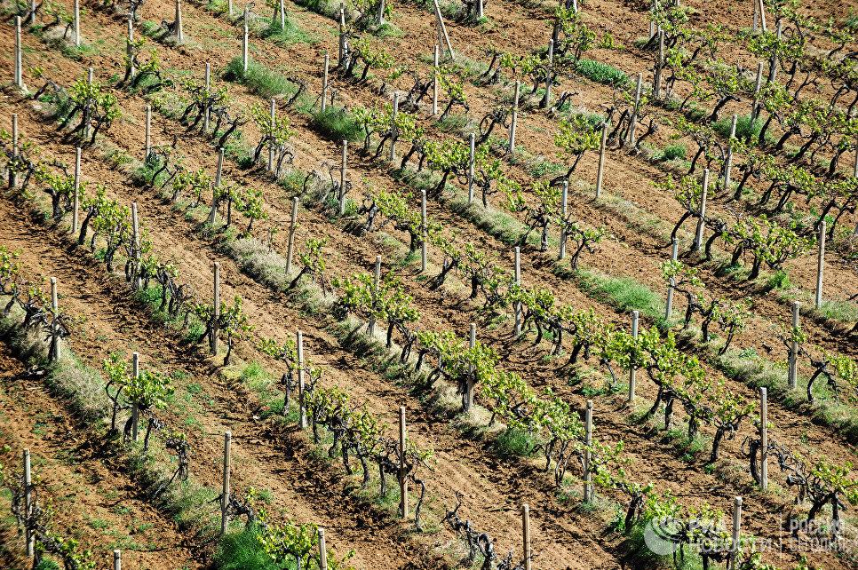 Богатые кальцием почвы Севастопольской зоны позволяют выращивать виноград для производства вин с большим потенциалом вызревания. Обилие склонов с южной, юго-восточной и западной направленностью (экспозицией) позволяет получать очень широкую палитру вин.