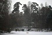 Собака бежит по льду