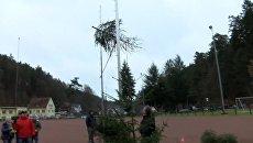 Чемпионат по метанию рождественских елок прошел в немецком Вайдентале