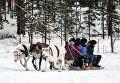 Китайские туристы катаются на оленьей упряжке в саамской деревне Самь-Сыйт в поселке Ловозеро Мурманской области