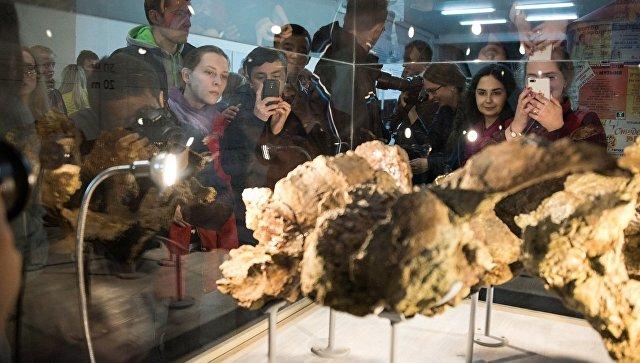 Учёные ТГУ открыли нового динозавра иназвали его сибиротитан