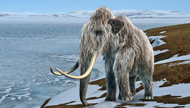 Самые последние шерстистые мамонты на Земле жили на острове Врангеля