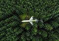 Снимок Самолет в лесу (Plane in the Forest) фотографа Mark Calayag, взявший приз в категории Popular Prize