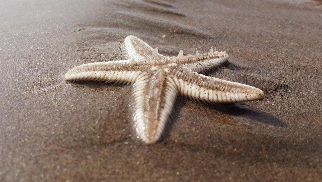 Морская звезда. Архивное фото