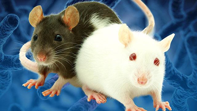 Лабораторные мыши с отредактированным геномом