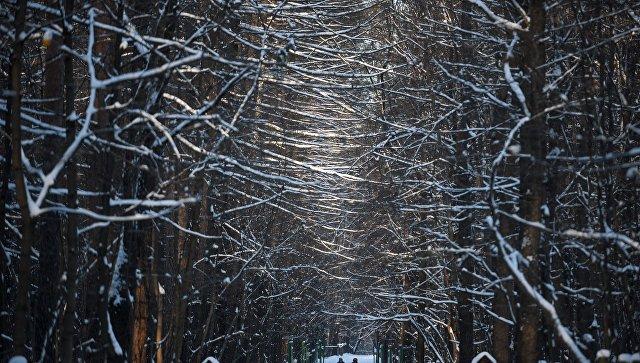 Московский парк зимой. Архивное фото