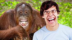 Смех возник в процессе эволюции