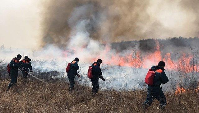 Сотрудники МЧС во время тушения очагов природных пожаров. Архивное фото