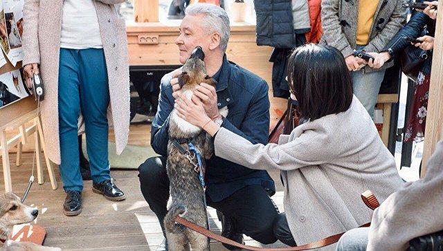 Собянин о собаке, которую взял из приюта: ему все равно, что я мэр