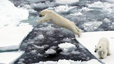 Белый медведь на льдине в Северном ледовитом океане