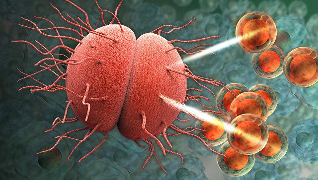 Супербактерия Neisseria gonorrhoeae устойчива практически ко всем известным антибиотикам