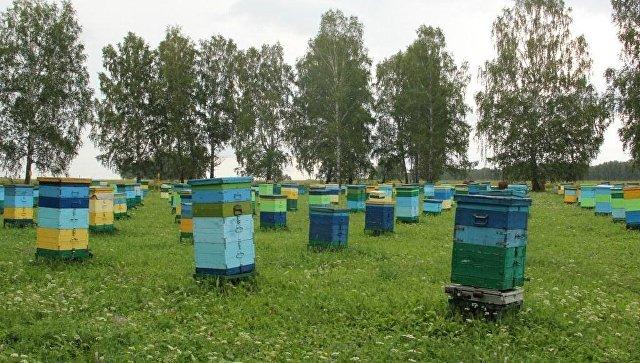 В Белгороде пчеловод изнасиловал и заковал в кандалы возлюбленную на пасеке