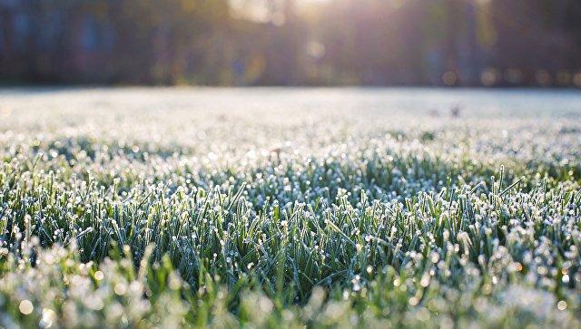 В Москве и Подмосковье прошли первые заморозки