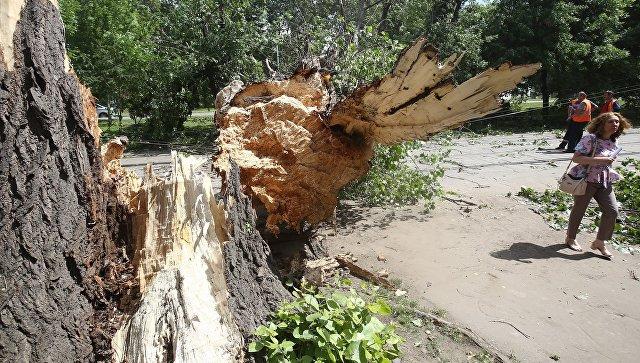 Сильный ветер повалил более 100 деревьев в Москве, сообщил источник