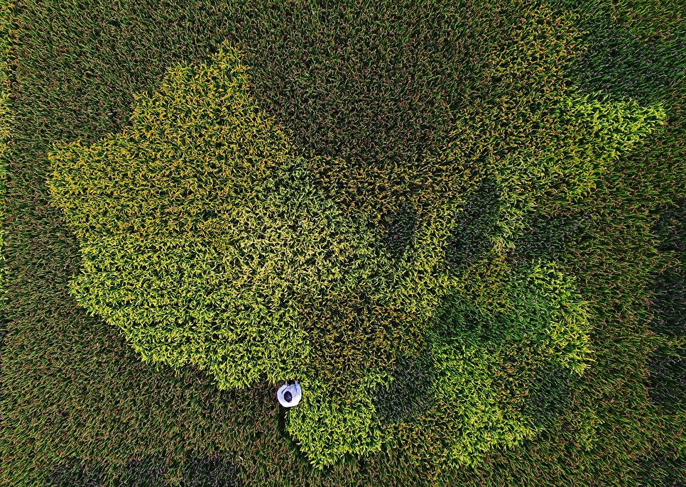 Фермер в рисовом поле, изображающим карту Китая