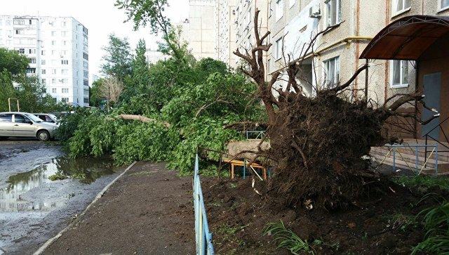 Дерево, поваленное ураганом в Оренбурге на улице Чкалова. 27 июня 2018