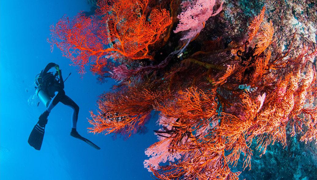У островов Италии нашли удивительные коралловые леса