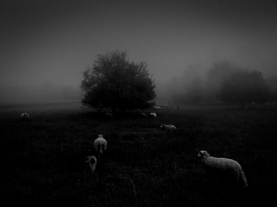 Работа фотографа Sukru Mehmet Omur из Франции Morning Fog, занявшая первое место в категории Природа в фотоконкурсе 2018 iPhone Photography Awards