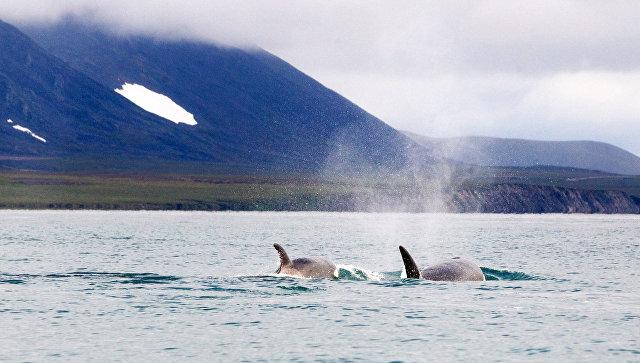 Куда плывут и как живут киты