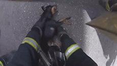 Пожарные на руках вынесли щенка из охваченного огнем дома в Испании