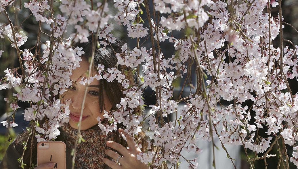 Девушка делает селфи с сакурой в буддийском храме в Токио. Архивное фото