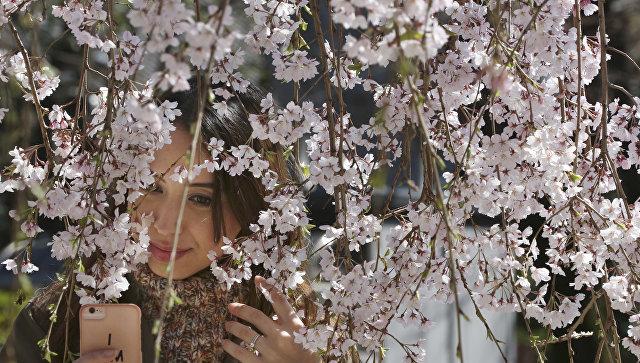 Девушка делает селфи с сакурой в буддийском храме в Токио
