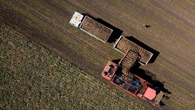 В Краснодарском крае заводы произвели миллион тонн сахара