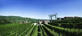 Cubo, символ вина сорта Бароло