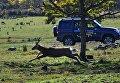 Машина сотрудника АНО  Дальневосточные леопарды в экопарке Леопарды на Гамова в Приморском крае