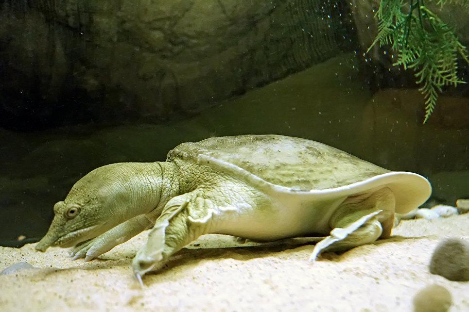Черепахи стремительно вымирают. Ученые бьют тревогу