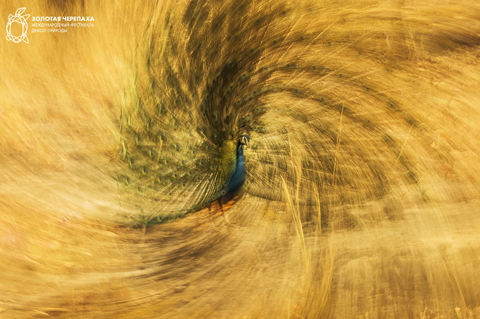 Королевская спираль. Пескуэро Хосе/Испания