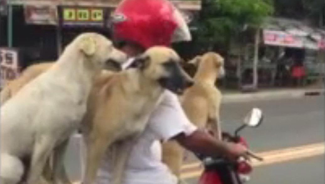 Кадр из видео, на котором мотоциклист перевозит трех собак