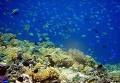 Подводный заповедник Менджанган на северо-западе Бали