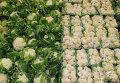 Витрина с цветной и брюссельской капустой.