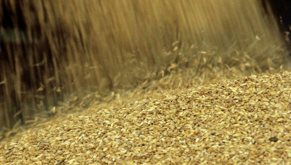Урожай зерна. Архивное фото