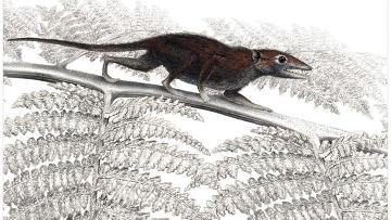 Juramaia sinensis в привычных условиях обитания