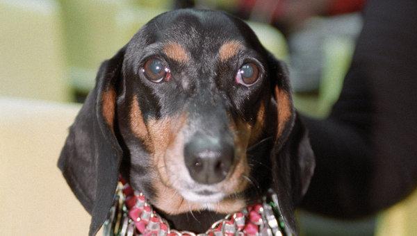 Самая старая в мире собака умерла в США
