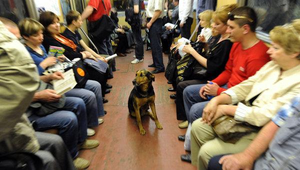 Бездомные животные в городском транспорте