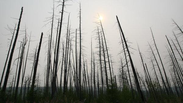Тушение лесных пожаров в Красноярском крае. Архив